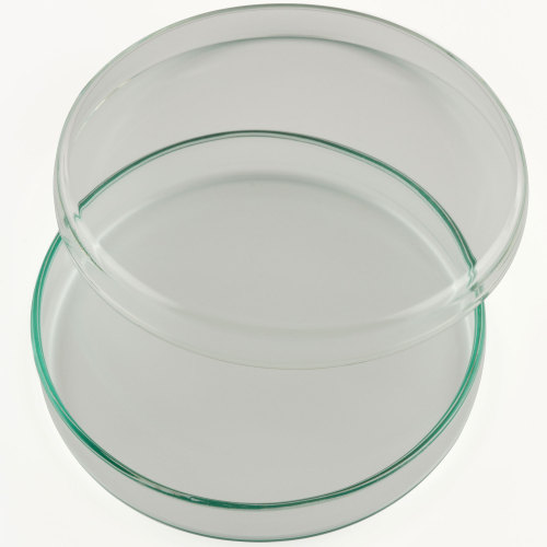 Dishes Borosilicate Glass