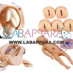 Abdominal Palpation & Delivery Mechanism Integrated